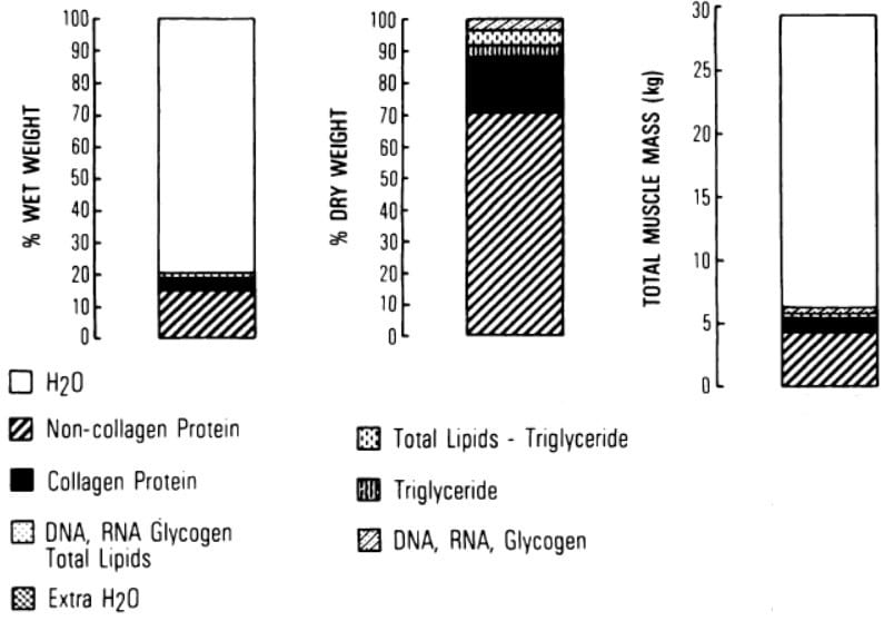 Muscle tissue composition