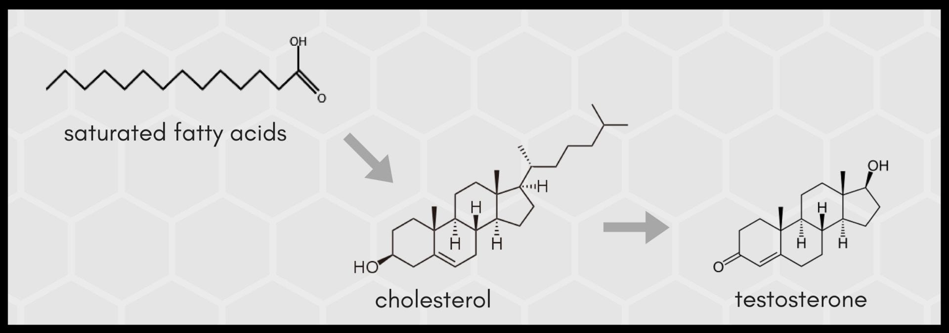 Saturated fat cholesterol testosterone