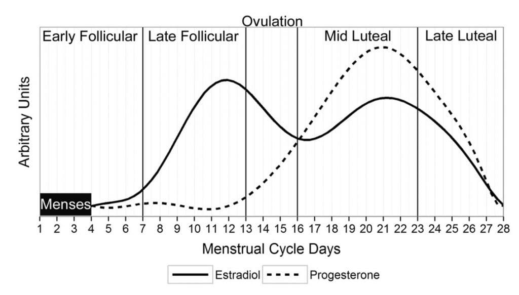 Menstrual cycle estradiol progesterone