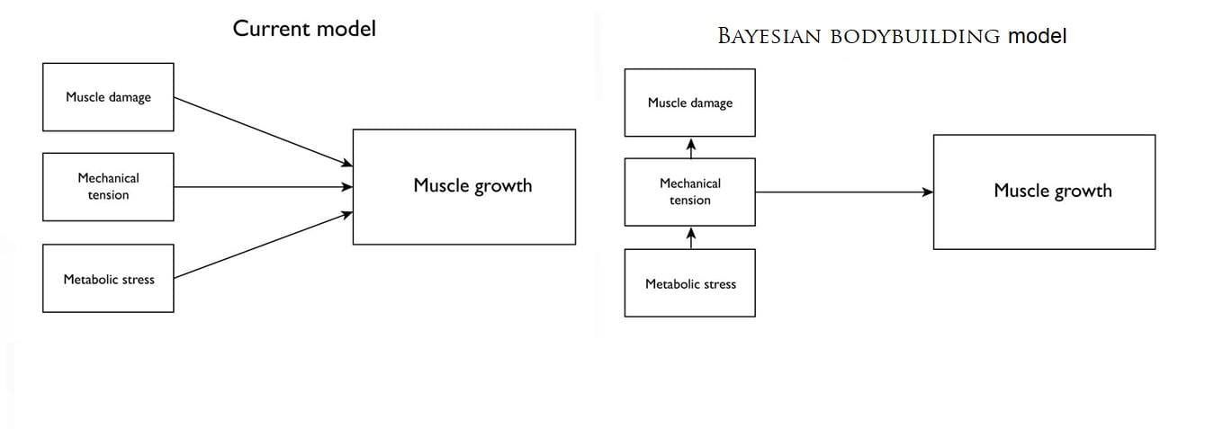 Mechanisms of muscle growth