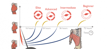 Your optimal training frequency for the glutes: part II