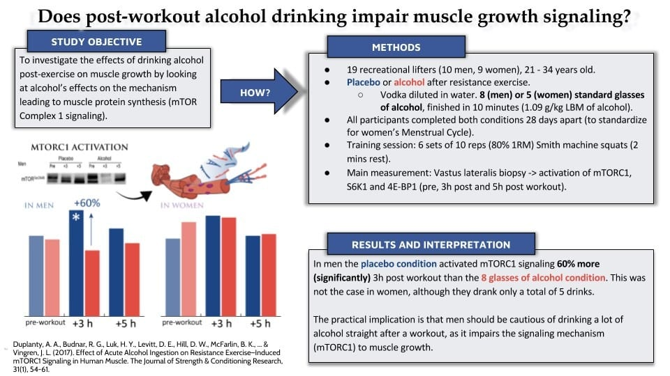 Effect of alcohol on muscle protein synthesis