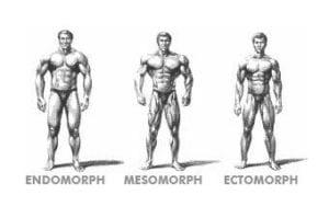 endomorph ectomorph mesomorph somatotypes