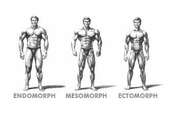 Somatoypes: Endo, ecto and -mesomorph  What does it mean?