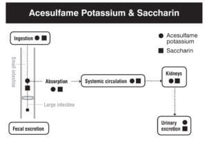 Saccharin digestion absorption metabolism excretion