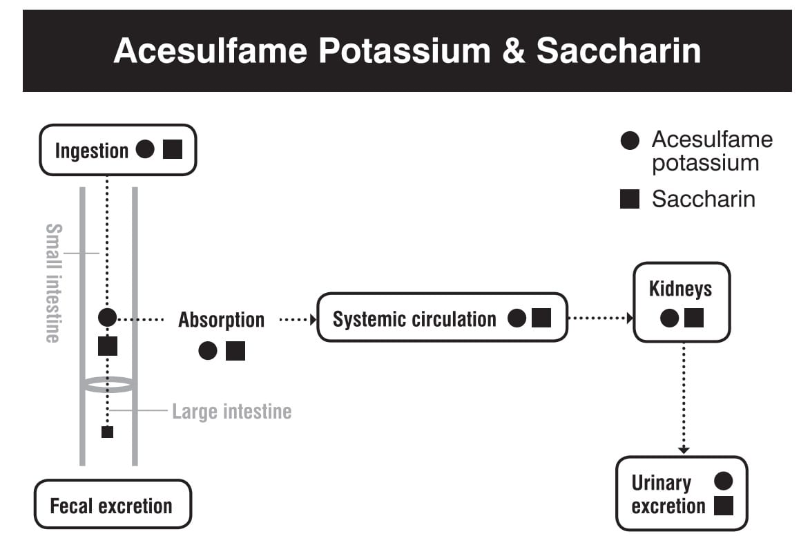Saccharin digestion absorption metabolism excretion