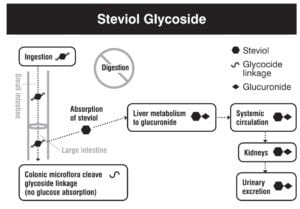 Stevia digestion absorption metabolism excretion