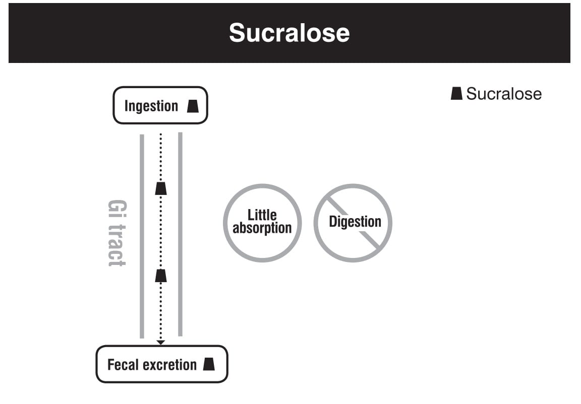 Sucralose digestion absorption metabolism excretion
