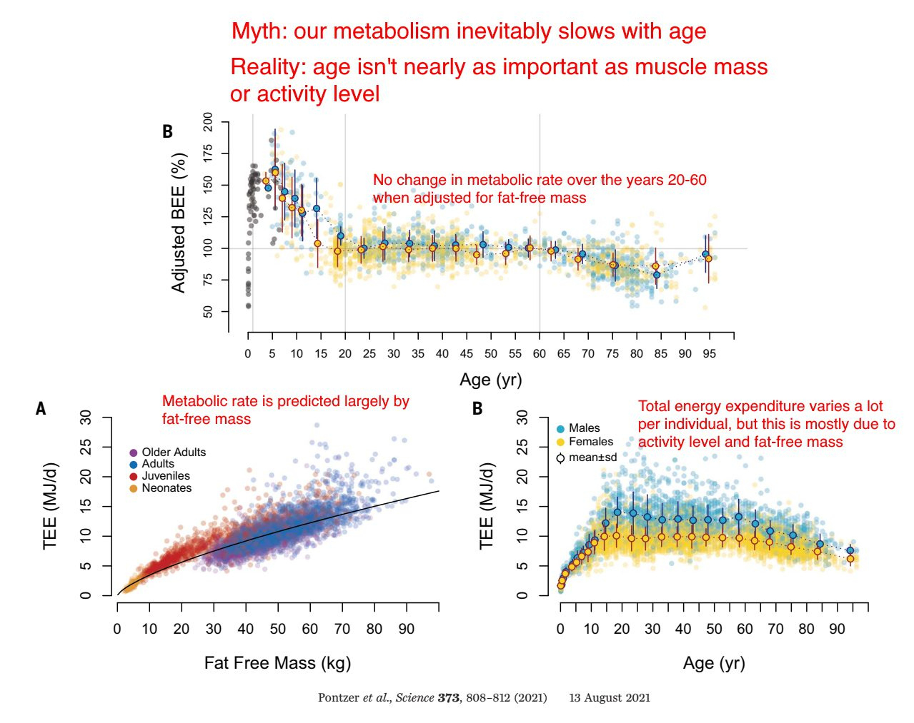 Metabolism with age