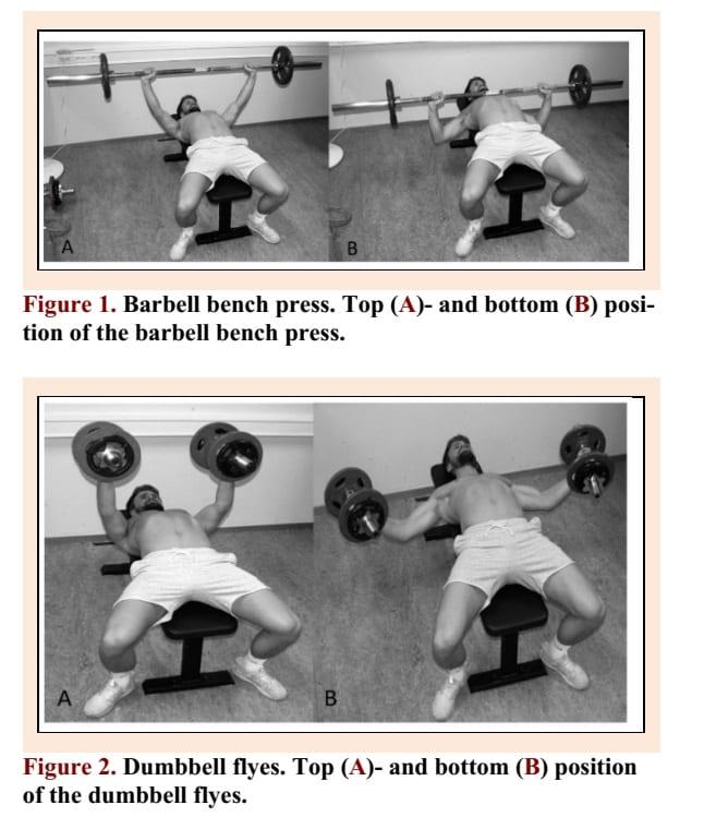Barbell bench press vs dumbbell flys