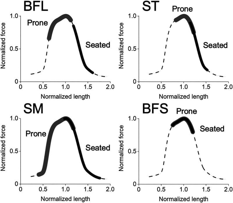 hamstring lying vs seated leg curl length-tension